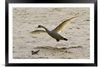 Coming in to land, Framed Mounted Print