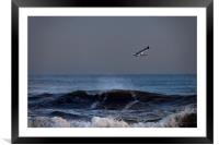 Lone seagull, Framed Mounted Print