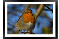 Robin in winter sunshine, Framed Mounted Print