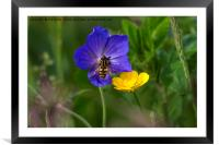 Cranesbill, buttercup and wasp, Framed Mounted Print