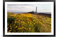 Wild flowers and St Mary's Island, Framed Mounted Print