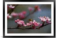 Artistic springtime, Framed Mounted Print