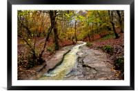 Wet Walk in the Woods, Framed Mounted Print