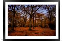 Autumn Woodland, Framed Mounted Print