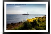 Springtime at St. Mary's Island, Framed Mounted Print