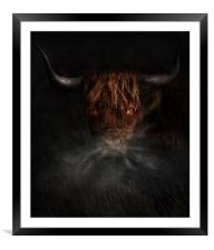 A west highland cow, Framed Mounted Print