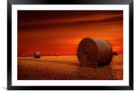 Crimson harvest, Framed Mounted Print