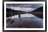Broken Tree on Derwent Reservoir, Framed Mounted Print