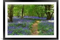 Bluebells, Framed Mounted Print