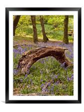 Bluebells magic, Framed Mounted Print