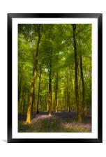 Embley Wood Bluebells, Framed Mounted Print