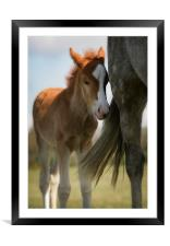 New Forest foal and mother, Framed Mounted Print