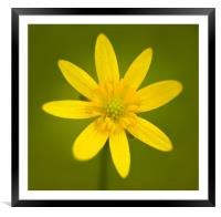 Buttercup 1, Framed Mounted Print