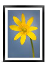 Buttercup 2, Framed Mounted Print
