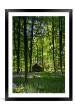 Wild Wood, Framed Mounted Print