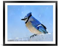 Watching the Snow, Framed Mounted Print