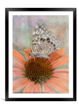 Hackberry Emperor Butterfly, Framed Mounted Print