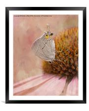 Gray Hairstreak Butterfly, Framed Mounted Print