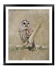 Barred Owl Portrait, Framed Mounted Print