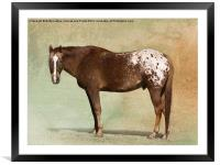 Appaloosa, Framed Mounted Print