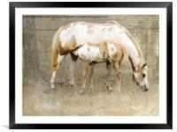 Pinto Mare and Filly, Framed Mounted Print