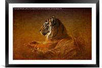 Dont Wake a Sleeping Tiger, Framed Mounted Print
