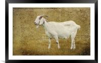 Billy Goat Gruff, Framed Mounted Print