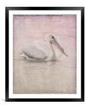 Pelican in Pastel, Framed Mounted Print