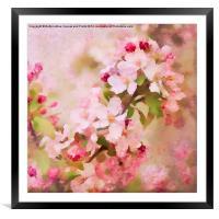 Spring Pink, Framed Mounted Print