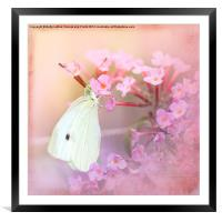 Butterfly Bliss, Framed Mounted Print