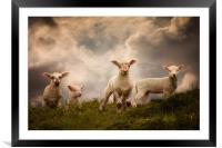 Lambs, Framed Mounted Print