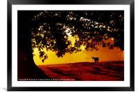 Pygmy Goat in Morning Light, Framed Mounted Print