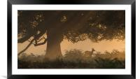Richmond Park, Sunrise, Red Deer, Hind, Framed Mounted Print