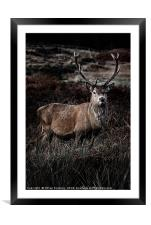 Stag, Framed Mounted Print