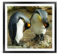 King penquins with arty effect, Framed Mounted Print