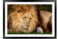 A gift for Cameron, Framed Mounted Print