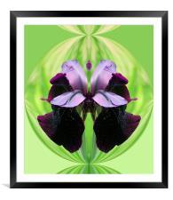 Abstract Iris flower, Framed Mounted Print