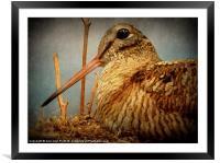 nesting, Framed Mounted Print