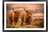 Highland Cattle, Framed Mounted Print