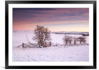 Winter Sunrise, Framed Mounted Print