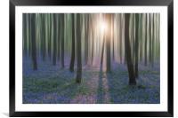 Bluebell Woods, Framed Mounted Print