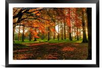 Autumn Woodland Walk, Framed Mounted Print