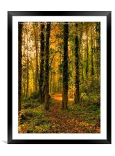 Autumn Woodland Walk, Framed Mounted Print