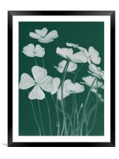 Am I Get Lucky ?, Framed Mounted Print