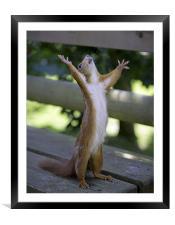 Red Squirrel praying, Framed Mounted Print