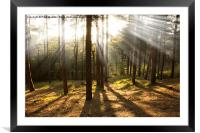 Sunbeams through the trees, Framed Mounted Print