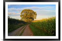 Oak Tree & Country Lane, Framed Mounted Print