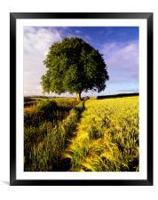 Oak and Barley, Framed Mounted Print