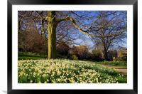 Sheffield Botanical Gardens in Spring, Framed Mounted Print