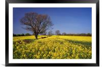 Rapeseed field & Tree, Derbyshire, Framed Mounted Print